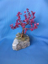 copacel feng shui cu coral 3